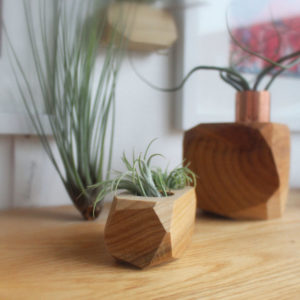 Air Plant Holders by Ray Alicia